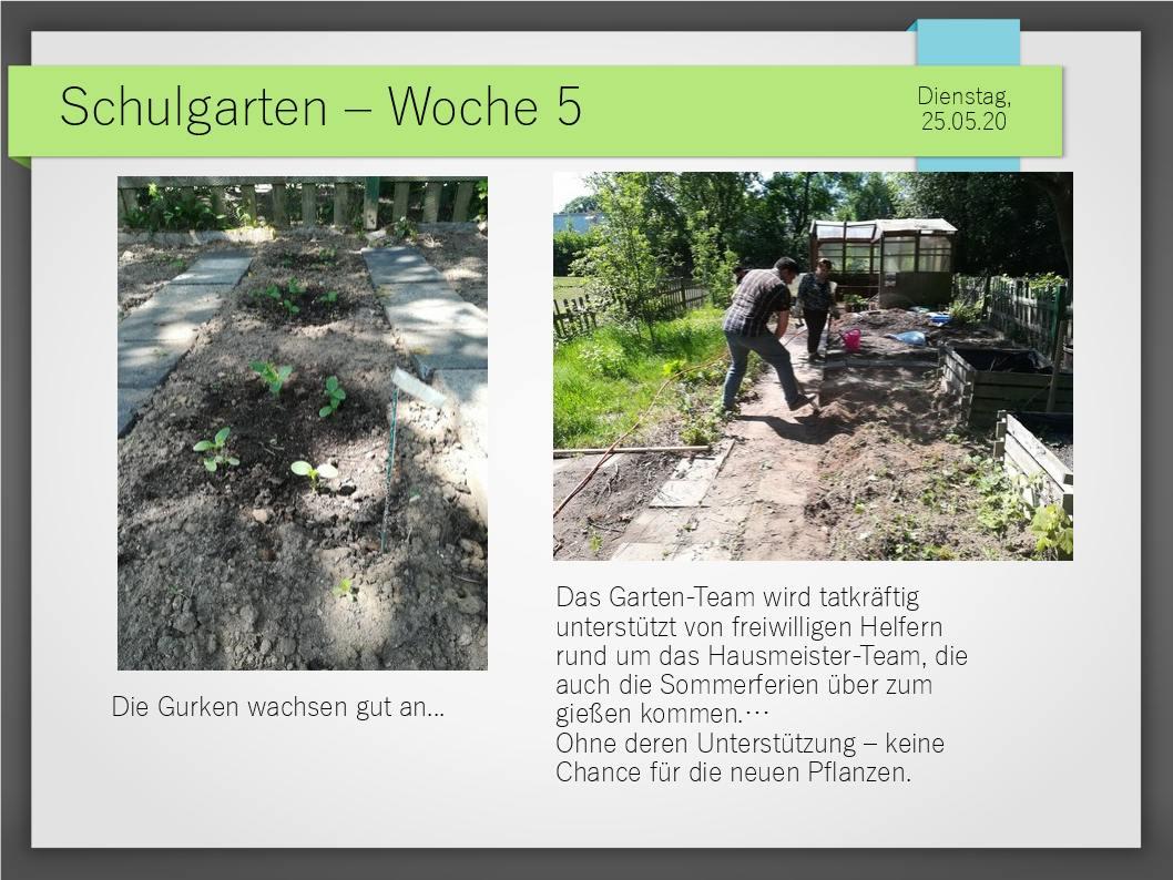 Schulgarten_ComeniusGesamtschuleNeuss_11