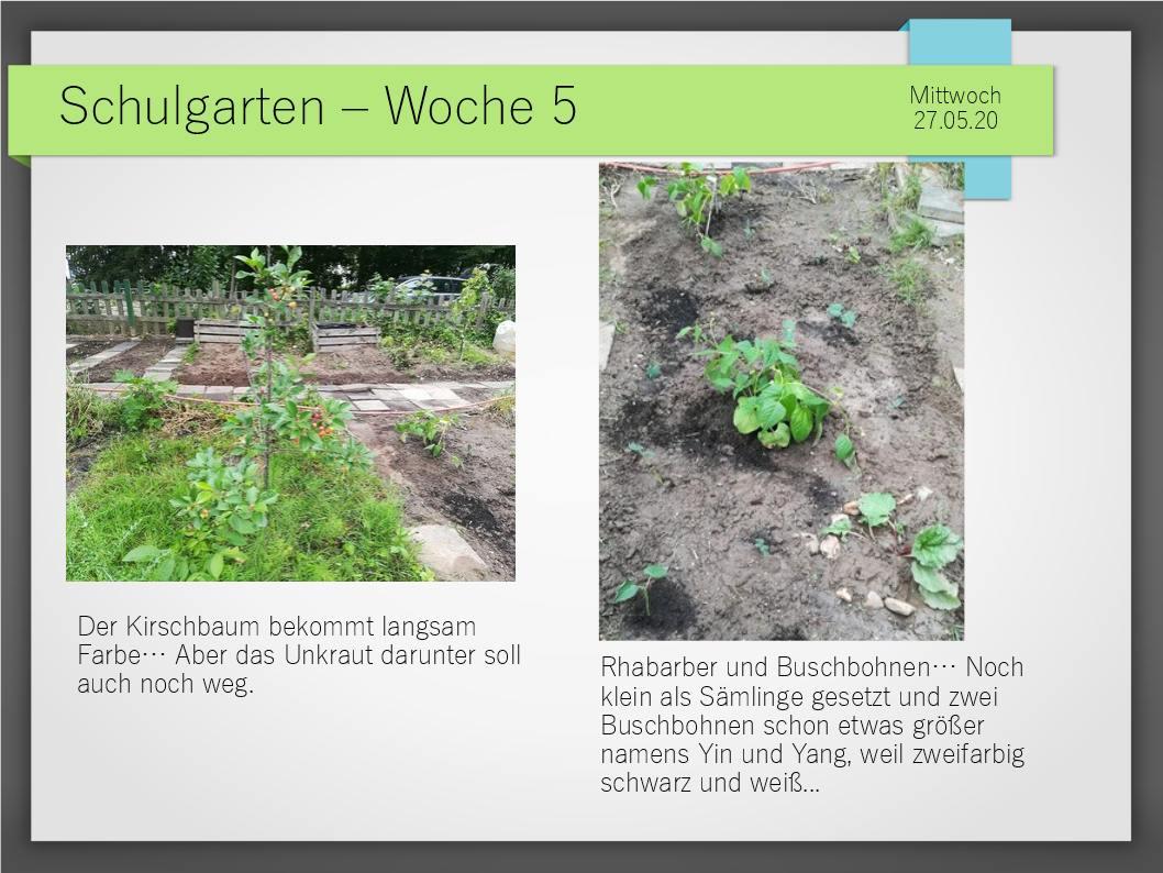 Schulgarten_ComeniusGesamtschuleNeuss_12