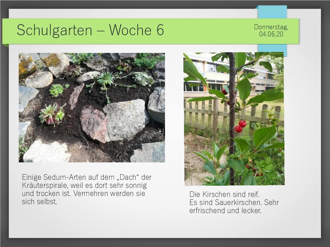 Schulgarten_ComeniusGesamtschuleNeuss_13