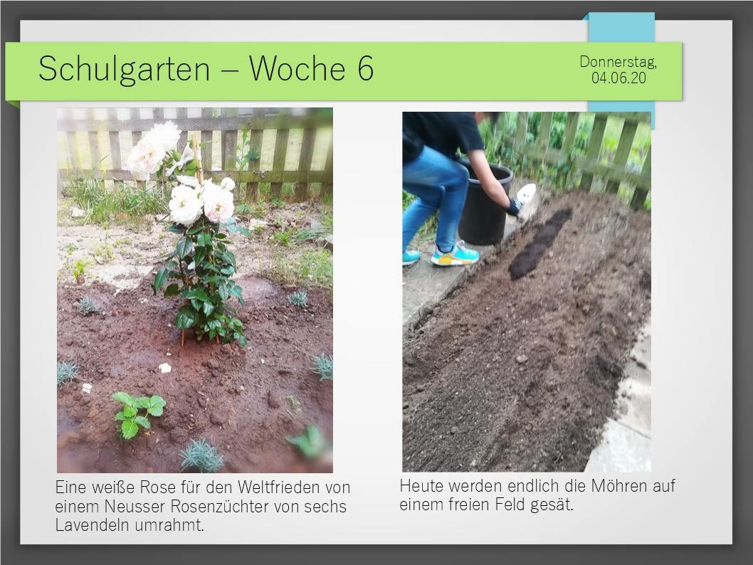 Schulgarten_ComeniusGesamtschuleNeuss_14