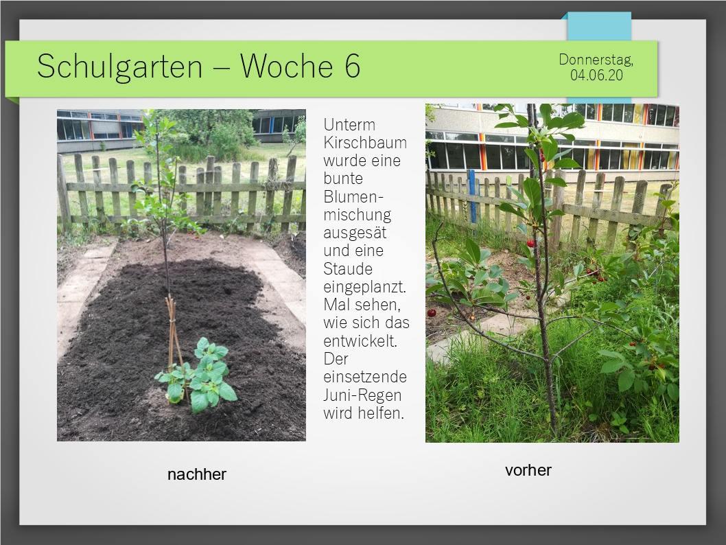 Schulgarten_ComeniusGesamtschuleNeuss_16