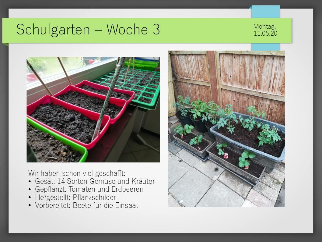 Schulgarten_ComeniusGesamtschuleNeuss_6