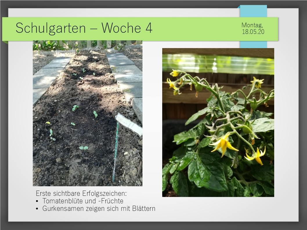 Schulgarten_ComeniusGesamtschuleNeuss_7