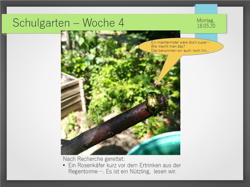 Schulgarten_ComeniusGesamtschuleNeuss_8